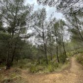 Forest sounds en route to La Croix d'Or